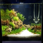 Fourth place in round one of the UK Aquascaping Championship - Hayley Soloman
