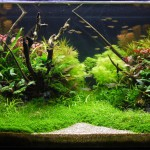 Third place in round one of the UK Aquascaping Championship - Manuel Arias