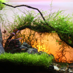 Fifth place in round one of the UK Aquascaping Championship - Marion Leach