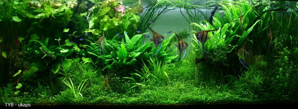 Jungle_Aquarium_Style