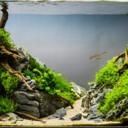 The different styles of aquascaping