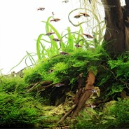 Round 1 of this year's UK Aquascaping Championship has closed!