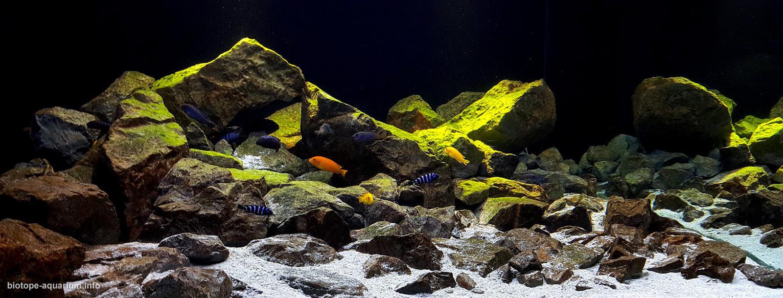 Biotope_Aquarium_Style