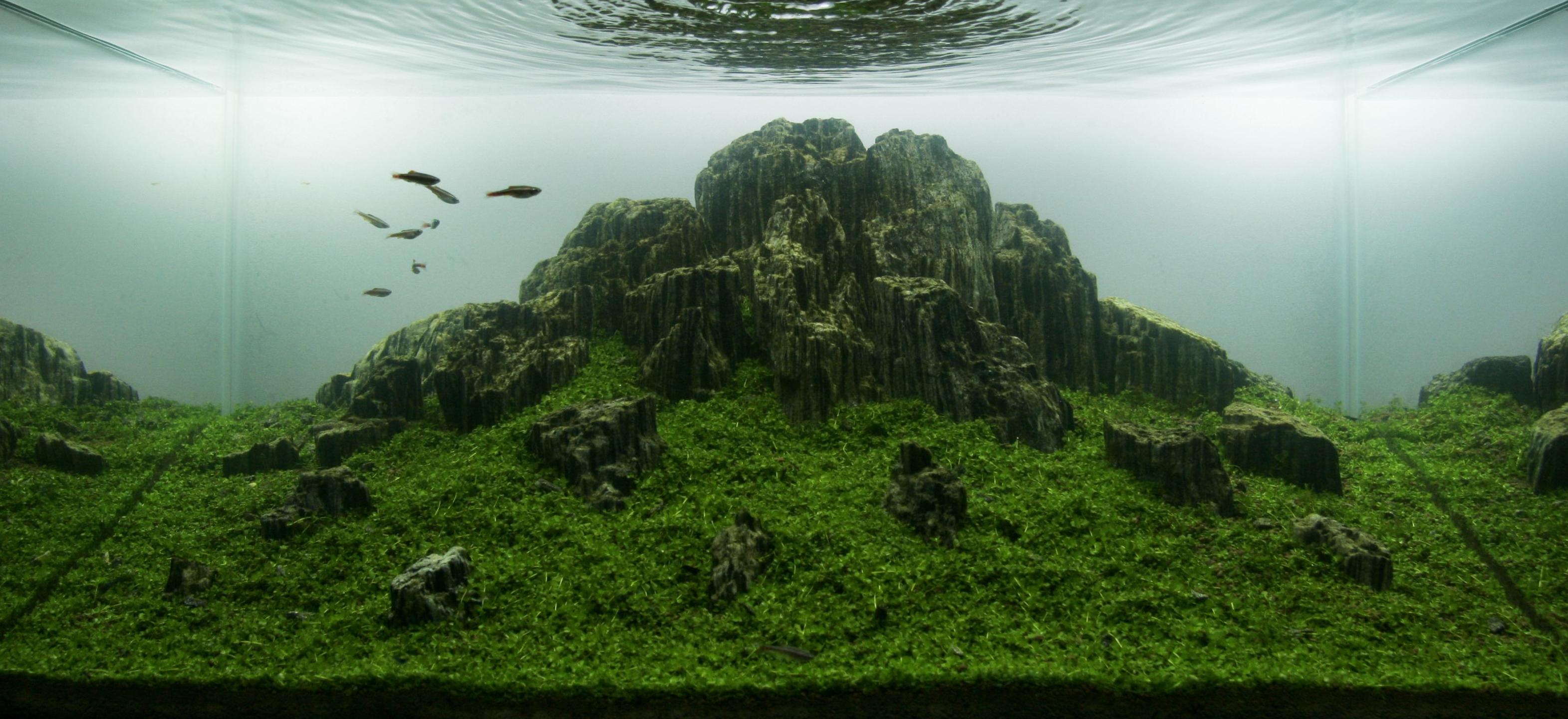 Iwagumi_Aquarium_Style