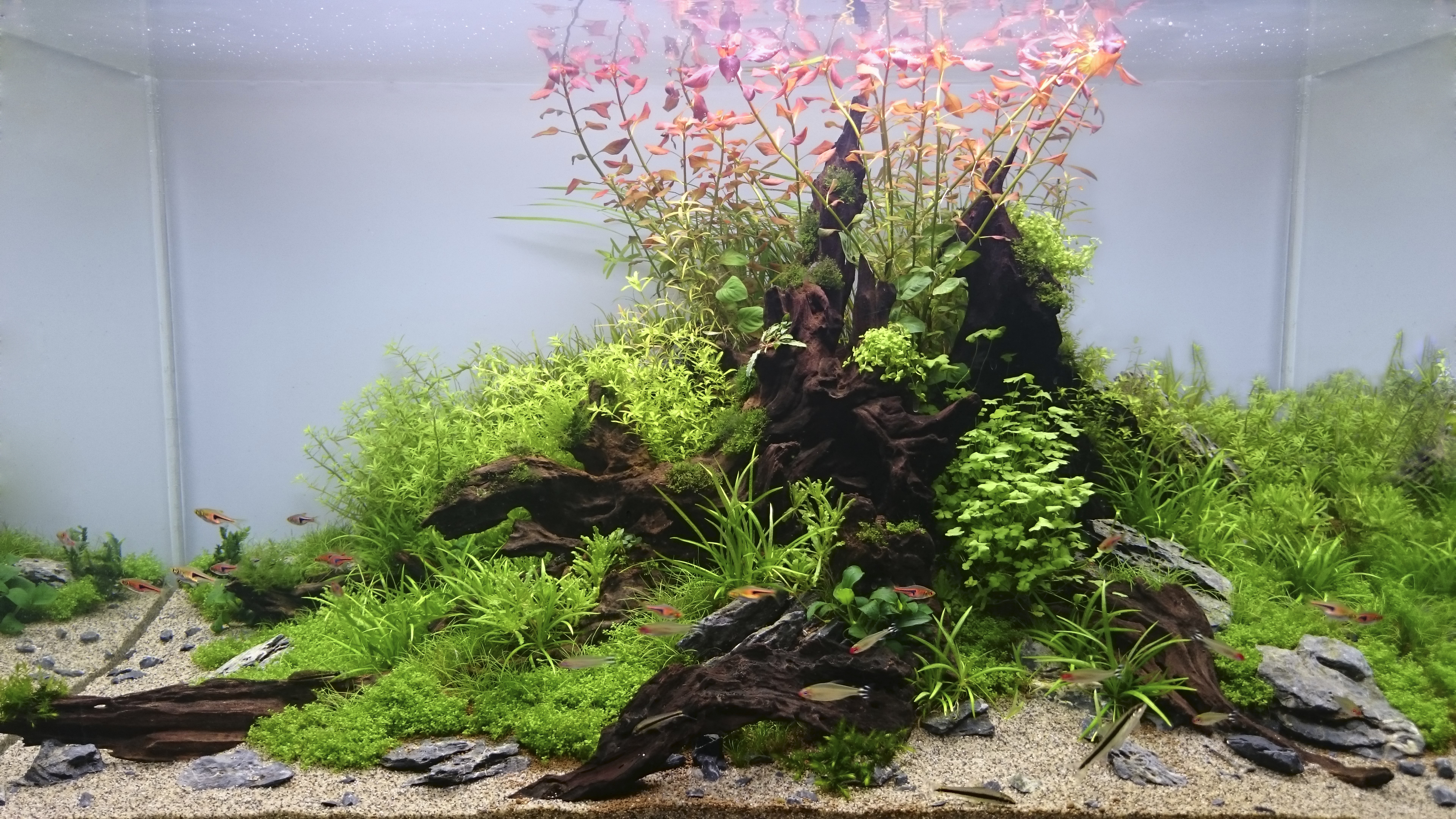 The Different Styles Of Aquascaping Ukasc Co Uk